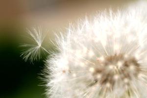 The Seeds of Agile Change