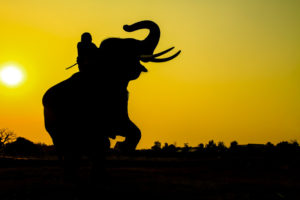 Managers and Agile and Riding an Elephant